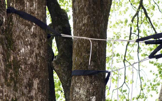 branch-out-tree-care-santa-barbara-coast-live-oak-cabling-installed-in-montecito-4