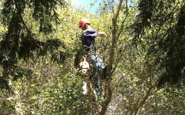 branch-out-tree-care-when-to-prune-in-the-santa-barbara-area